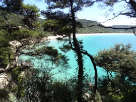 Golden Beaches, Rain forest... (Abel Tasman NP)