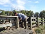 Theo hilft die Kühe zu treiben