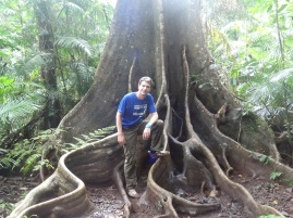 in Tablelands rain forest (Northern Queensland)
