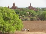 Bagan. Landwirtschaft wie zu Gottfelf's Zeiten