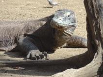 Dieser Komodowaran ging in Angriffsstellung, als er mein schwingendes Kameraetui sah