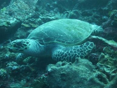 """Einige Taucher schimpfen Komodo """"schildkrötenverseucht""""..."""