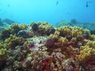 Komodo NP unter Wasser